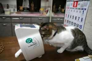 cat checking blood pressure